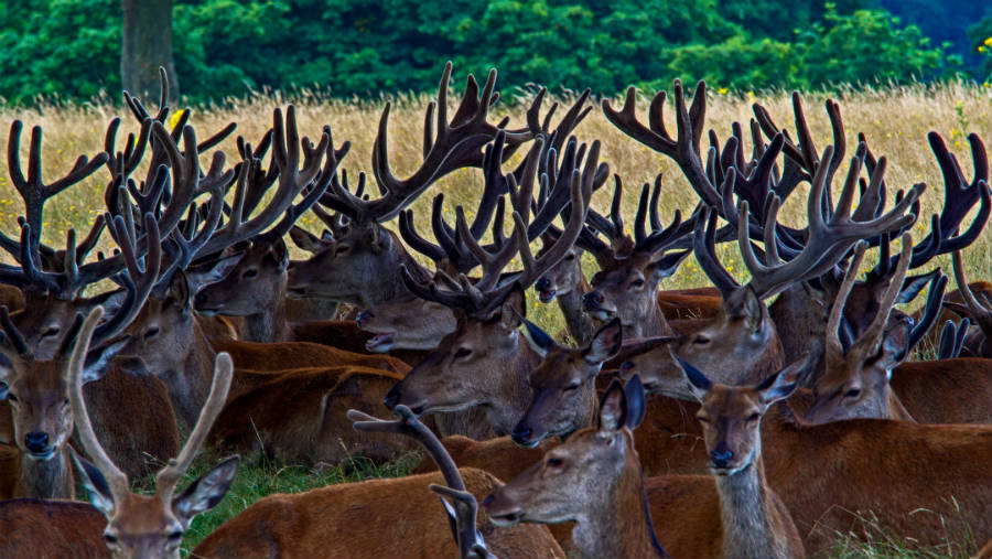 deer-nearby-our-automation-headquarters